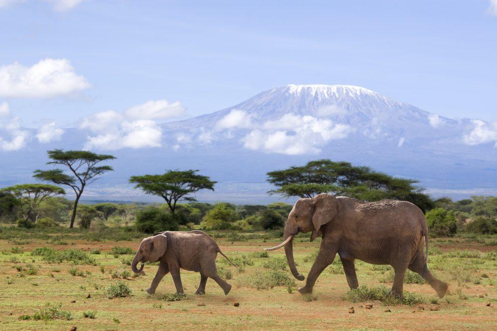 Safari Discover Kenia Deluxe