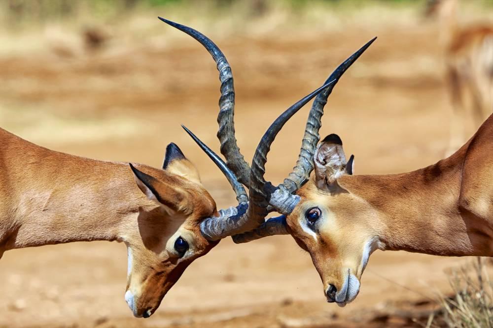 Pracht & Praal van Kenia