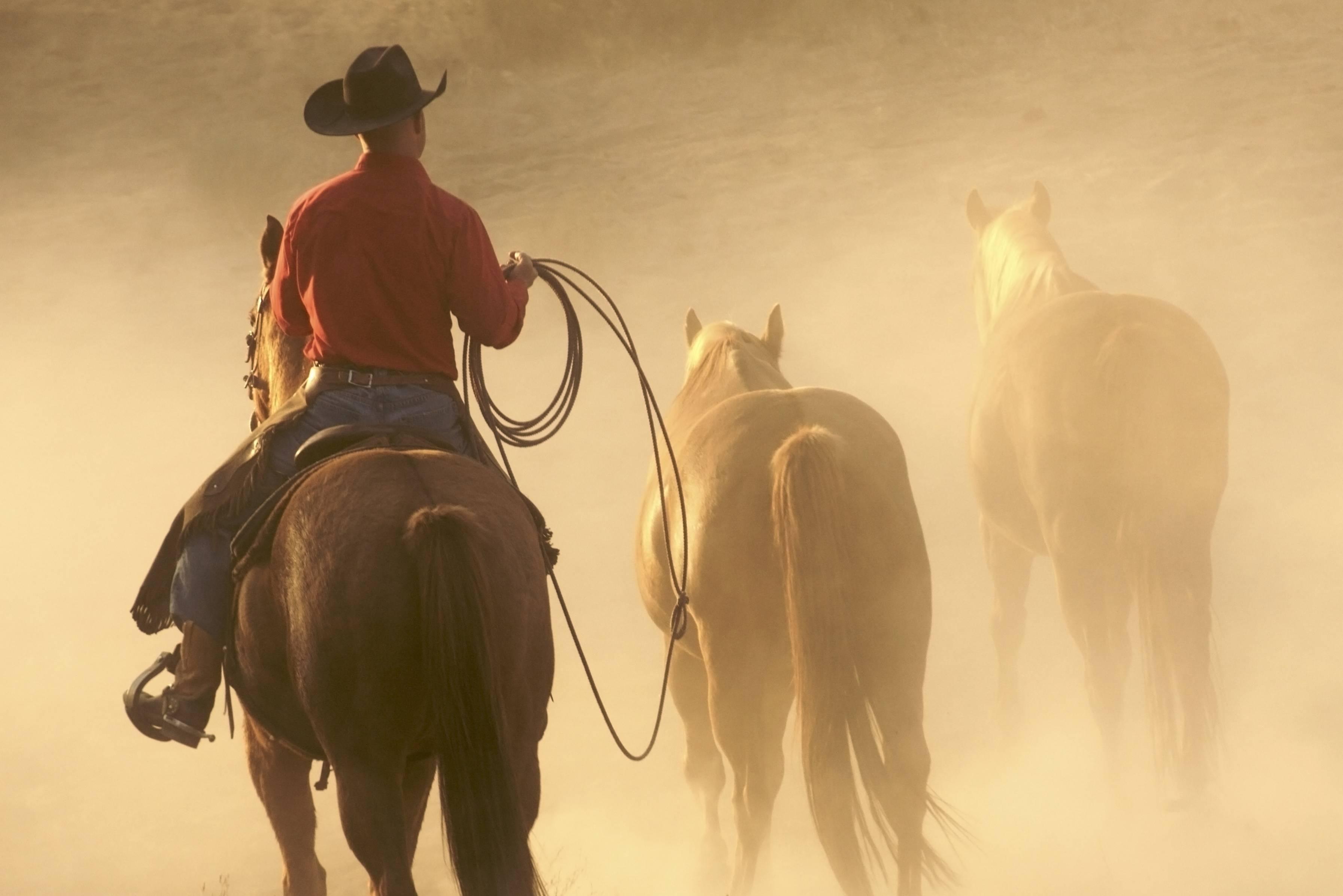 Amerikaanse cowboy dating site conflict in adolescent dating relaties inventaris (Chantal Wolfe et al. 2001)