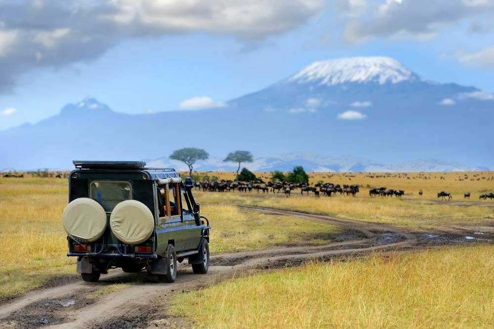 Safari Discover Kenia