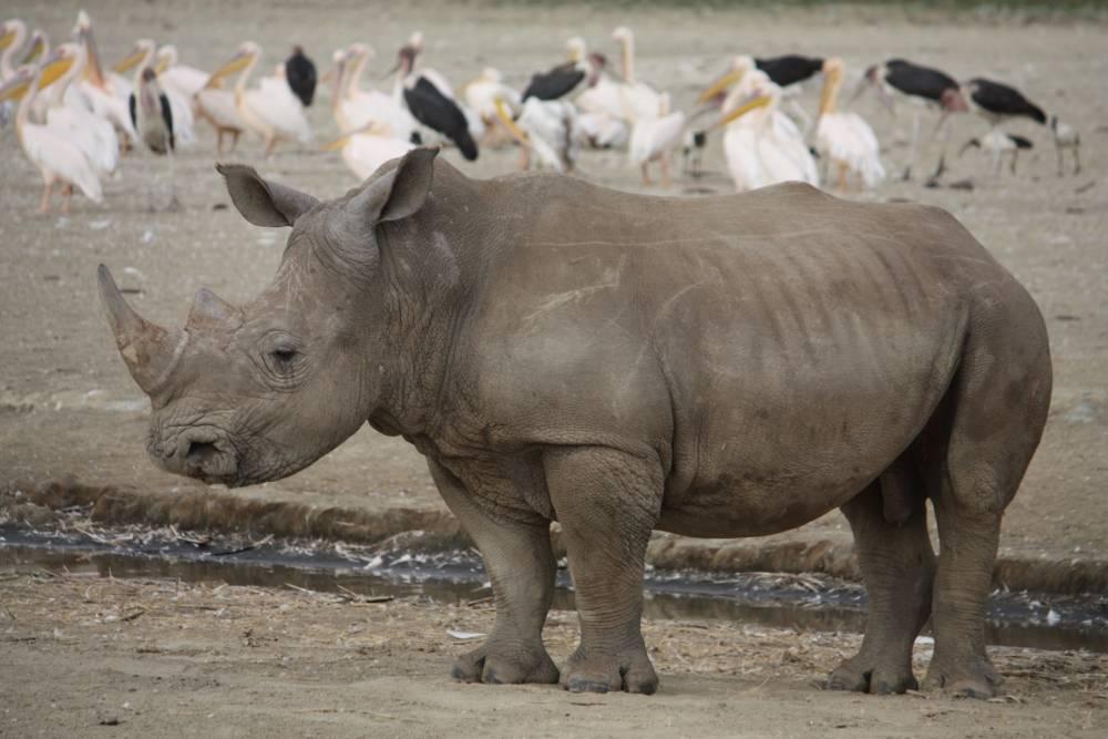 Wildlife Experience Kenia & Tanzania in internationale groepjes