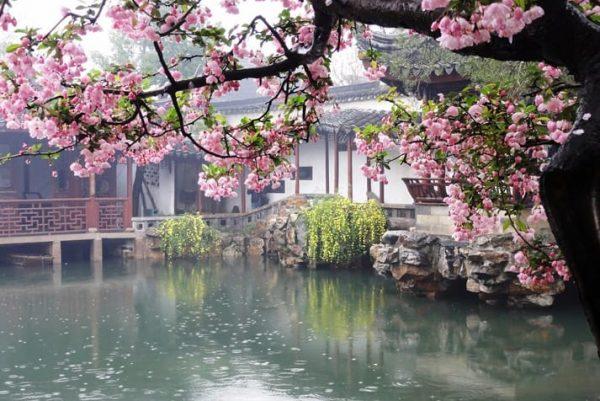 De Geur van Chinese Jasmijn