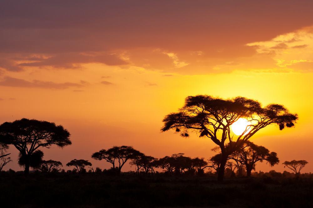 Safari Dwars door Kenia