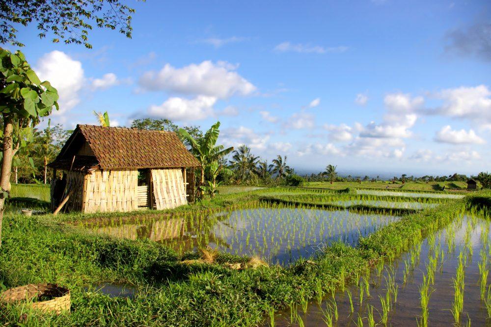 Wegdromen in Balinese luxe <br/>€ 2126.00 <br/> <a href='https://www.333travel.nl/travel/?tt=4015_1631729_241358_&r=https%3A%2F%2Fwww.333travel.nl%2Findonesie%2Frondreis%2Fwegdromen-in-balinese-luxe' target='_blank'>Meer reisinfo</a>